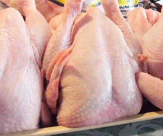 Memilih Ayam Segar